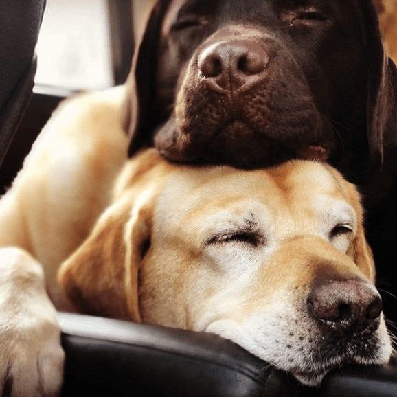 Grateful Dog Walker Dog Boarding