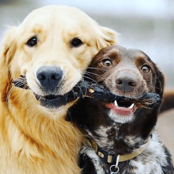 Dog Walker Drop-In Visits