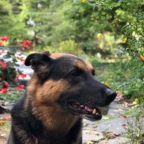 Happy Dog after Drop In Visit