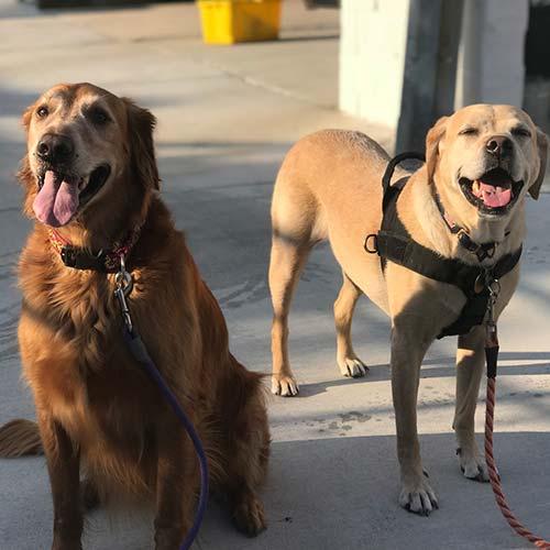 Drop In Visit from Dog Walker