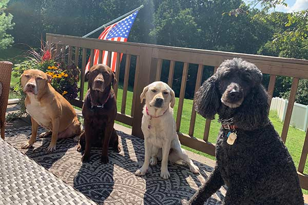 dog boarding in baltimore county